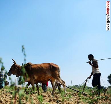 MP : किसानों के लिये 1000 करोड़ के कोष का गठन