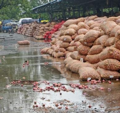 प्रदेश में प्याज की बाढ़, पहली बारिश में भीगा 5 हजार क्विंटल