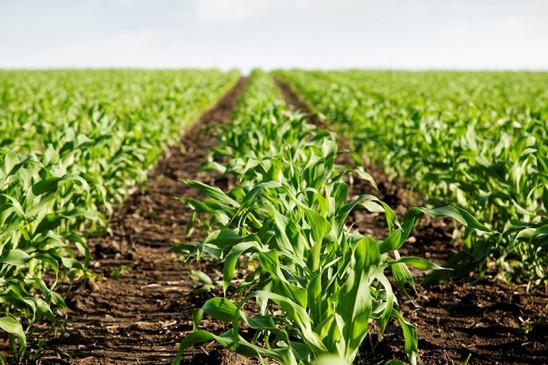 जैविक खेती से सेवाग्राम आश्रम को 15 लाख का मुनाफा