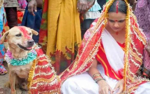 यहां जेंटलमैन से पहले इस जानवर से होती है लड़की की शादी