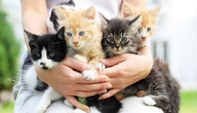 इस देश में चली बिल्लियों के लिए स्पेशल ट्रेन, 30 ने किया सफर