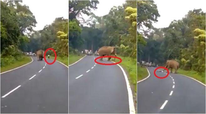 ...जब गजराज को आया गुस्सा, पैरों तले युवक को रौंदा, देखें VIDEO