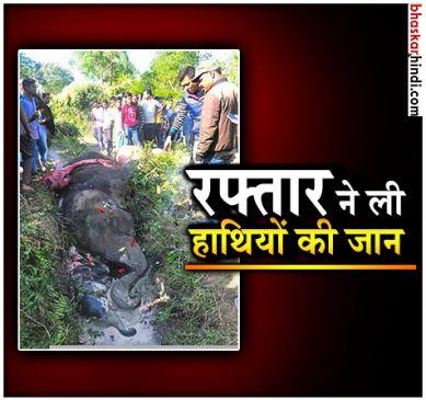 असम में ट्रेन की चपेट में आने से 6 हाथियों की मौत