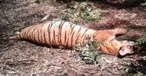 नैनीताल: जिम कार्बेट नेशनल पार्क में मिला बाघिन का शव