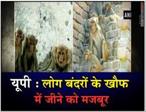 यूपी : संभल में बंदरों का अातंक, अब तक 225 लोग घायल