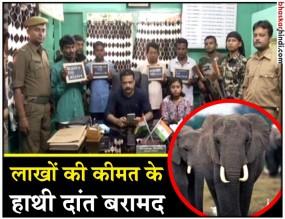 पश्चिम बंगाल : हाथी दांत की तस्करी करते इंजीनियर सहित 4 गिरफ्तार