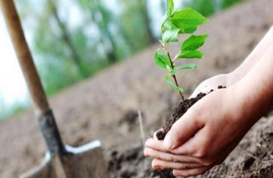 स्कूल-कॉलेज गोद लेंगे मराठवाड़ा की पहाड़ियां, रोपेंगे पौधे