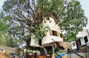 इंजीनियर ने पेड़ पर बनाया अपना आशियाना, लिम्का बुक ऑफ रिकॉड्स में दर्ज हुआ नाम