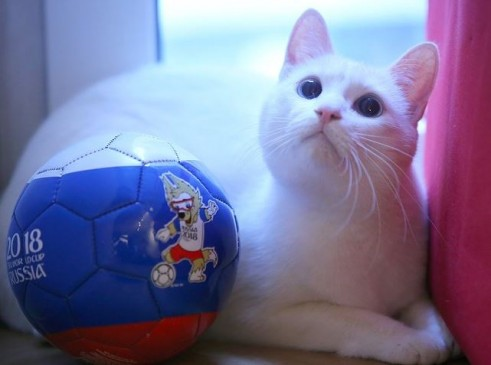 FIFA World Cup : ऑक्टोपस पॉल के बाद अब ये बिल्ली करेगी भविष्यवाणी