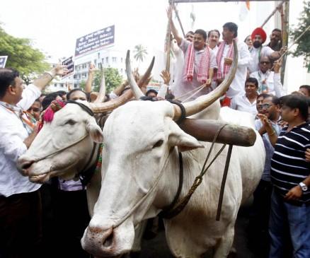 बैलगाड़ी मोर्चा निकालकर कांग्रेस ने किया महंगाई का विरोध