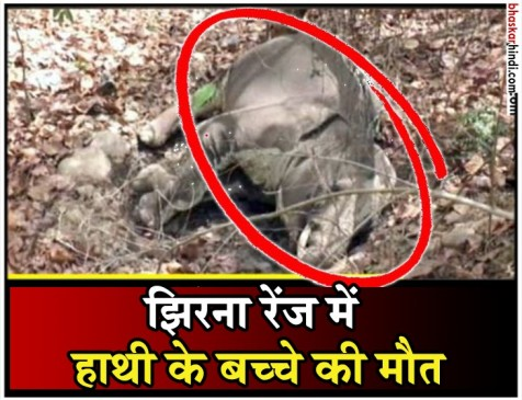 नैनीताल: जिम कॉर्बेट नेशनल पार्क में मृत मिला हाथी का बच्चा