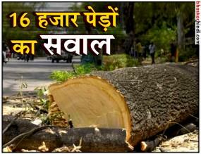 दिल्ली HC का फैसला: 16 हजार पेड़ काटने पर फिलहाल रोक