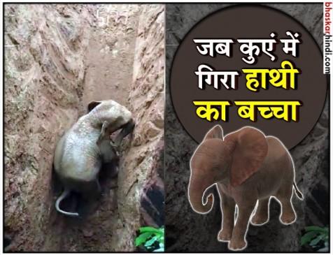 कुएं में गिरा हाथी का बच्चा, रेस्क्यू कर निकाला बाहर