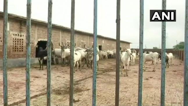 दिल्ली की गोशाला में 36 गायों की मौत, केजरीवाल सरकार ने दिए जांच के आदेश