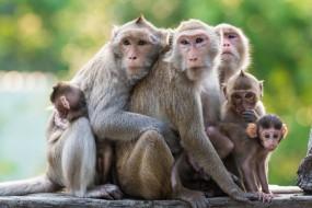 अजब-गजब: बंदरों ने किए बम धमाके, 4 लोग घायल