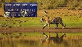 आखिरकार महाराष्ट्र के भी जंगल खुले, मध्यप्रदेश, राजस्थान और उत्तराखंड में पहले से शुरु बफर जोन