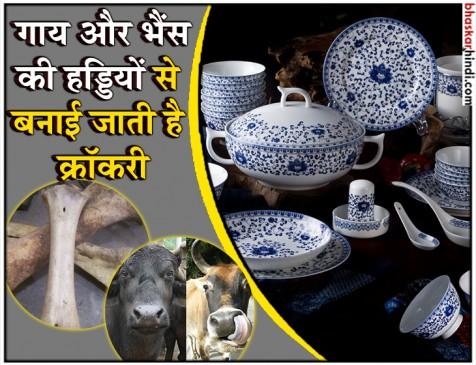 गाय और भैंस की हड्डियों से बनी क्रॉकरी में पीते हैं आप चाय