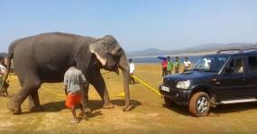 जब हाथी ने Mahindra scorpio को मुसीबत से निकाला