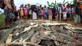 इंडोनेशिया: गुस्साई भीड़ ने 292 मगरमच्छों का कत्ल कर लिया मौत का बदला
