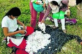 देसी कॉटन से बनी राखी की हो रही ऑनलाइन बिक्री, ग्राम आर्ट प्रोजेक्ट के युवा कर रहे प्रमोट