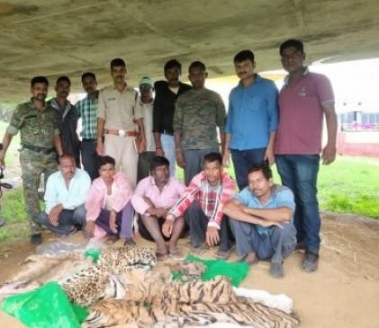 बाघ एवं तेंदुआ की खाल समेत पांच आरोपी धराए, अंतर्राष्ट्रीय कीमत 25 लाख रुपए
