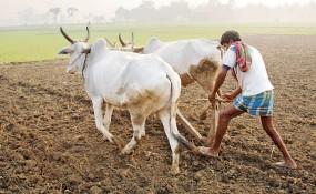 साल 2016 की बेमौसम बारिश से प्रभावित किसानों को 515 करोड़ 24 लाख रुपए की मदद
