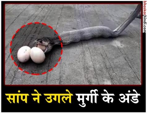 इस सांप ने महज 27 सेकेंड में उगले 9 अंडे, देखिए VIDEO