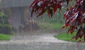 बादलों को ताक रहे किसान, 16 अगस्त तक केवल पूर्वी विदर्भ में बारिश का अनुमान