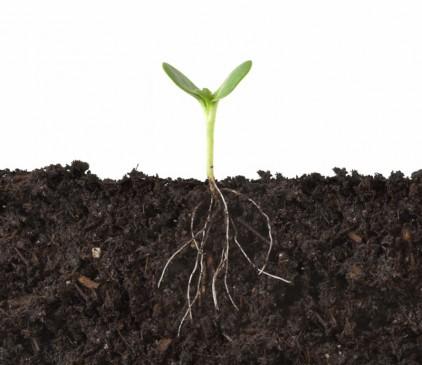 रासायनिक उर्वरकों से लगातार घट रही है मिट्टी की उर्वरा शक्ति