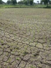 बारिश की बेरुखी से अटकी धान की रोपाई, मंडरा रहा सूखे की खतरा