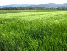 कृषि कर्ज में चंद्रपुर फिसड्डी, वित्तमंत्री के गृह जिले में किसानों को वित्त देने से मुकर गए 28 बैंक