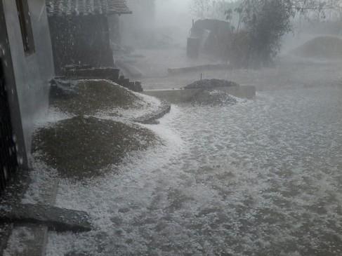 सांगली की जत तहसील में तेज बारिश के साथ गिरे ओले, फसल का नुकसान