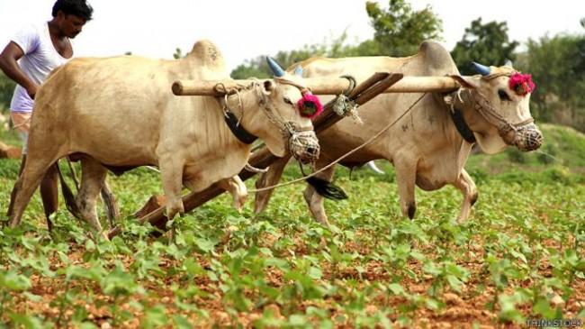 मुंबई कूच करेंगे विदर्भ-मराठवाड़ा के किसान, सरकार के खिलाफ मनसे का भी मोर्चा