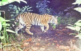 नागपुर शहर के सहारा सिटी के पास घूमती दिखी बाघिन, वन विभाग अलर्ट