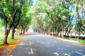 महाराष्ट्र के गोंदिया में महामार्ग चौड़ाईकरण के लिए 4 हजार पेड़ों कीबलि