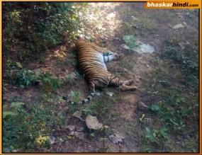 पवनी वाइल्ड लाईफ रेंज में मृत मिला बाघ, मौत के कारण का खुलासा नहीं