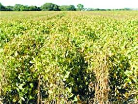 स्टूडेंट्स की मदद से सरकार करेगी 45 हजार गांवों का सर्वे, किसानों को होगा फायदा