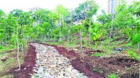 पौधारोपण का लक्ष्य पूरा नहीं करने पर लगाने होंगे एक्स्ट्रा 5 करोड़ पौधे