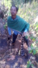 बाघ की खाल सहित शिकारी गिरफ्तार ,एक सप्ताह पूर्व करंट लगाकर किया था शिकार