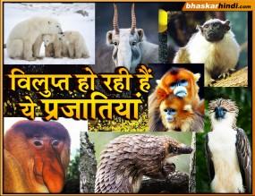 दुनिया में तेजी से विलुप्त हो रही है इन खूबसूरत जानवरों की प्रजाति