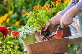 महकाएं घर आंगन - गर्मी में पौधों को बस थोड़ी सी देखभाल की जरूरत