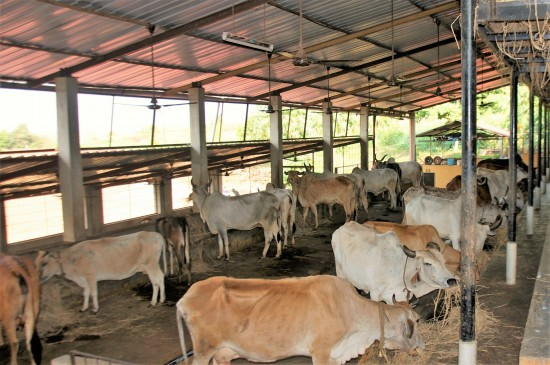 गोसेवा केंद्र के लिए सरकार ला रही नई योजना, मंत्रिमंडल में लिया गया फैसला