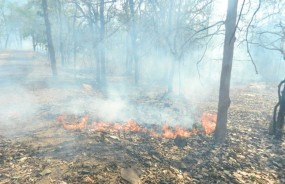 दावानल से धधक रहा गड़चिरोली का जंगल, बहुमूल्य वनसंपदा जलकर खाक