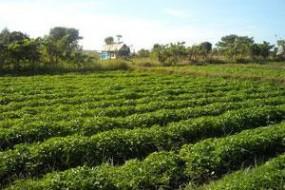 कृषि क्रांति : 100 गांवों में होगी पर्यावरण पूरक खेती