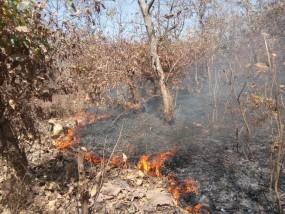 बिलाड़ी के जंगल में लगी भीषण आग, लाखों की वन संपदा जलकर हुई राख