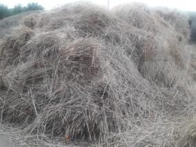 आसमान से आफत की बरसात, फसलें बर्बाद -जिले में 40 हजार हेक्टेयर की गेहूं की फसल प्रभावित