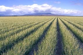 20 लाख भी ले लिए और नहीं दिया मक्का का बीज, किसान हो रहे परेशान