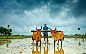 किसानों के लिए बुरी खबर, इस बार सामान्य से कम रह सकता है मानसून