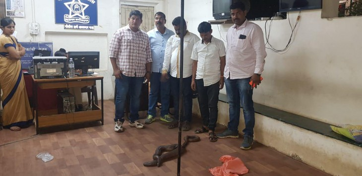 डेढ़ करोड़ रुपए वाले दो मुंहा सांप के साथ दो गिरफ्तार, बेचने की फिराक में थे आरोपी