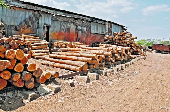रेलवे पटरी पर चल रहा लकड़ा बाजार, फैलता जा रहा अतिक्रमण